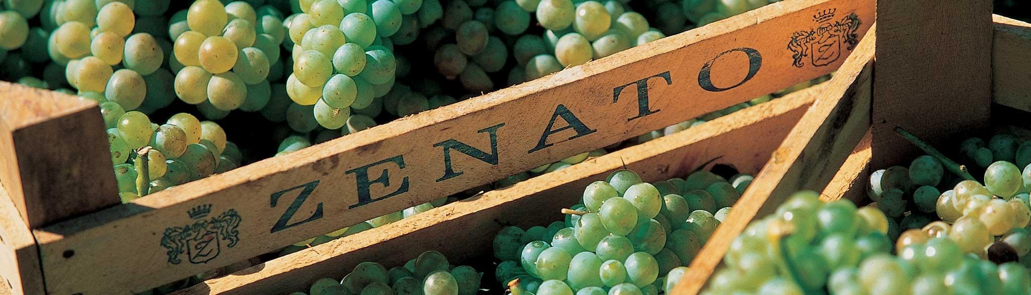 zenato wijn